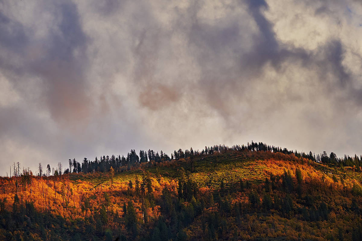 Fall in the Feather River Canyon